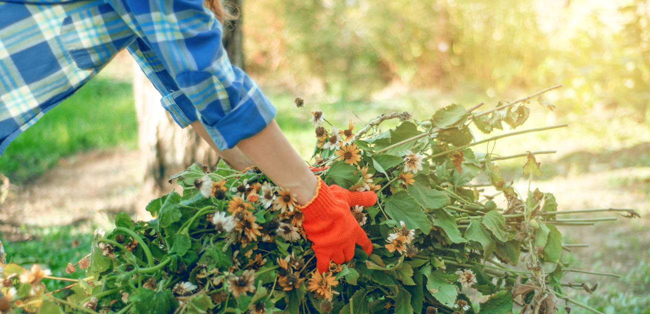 First-Time Gardener? Here's How to Prepare for Fall