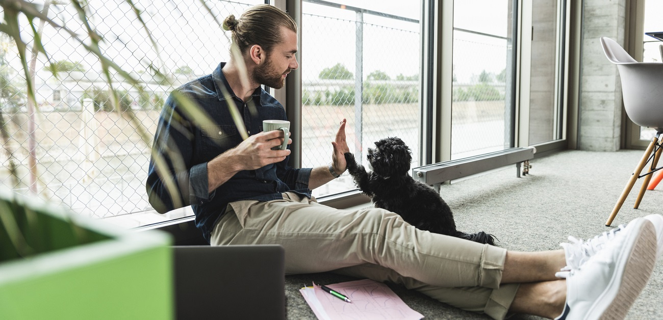 Young businessman playing with dog in office