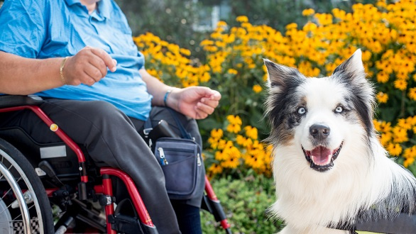 Therapy Dog Helping Disabled Senior Man
