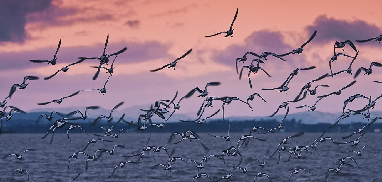 Birds migrating over water