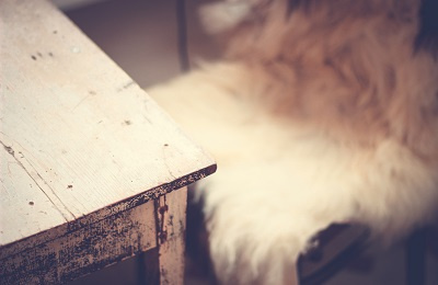 Faux fur chair and table