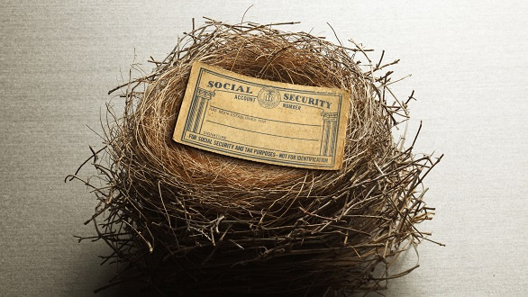Social Security Card Resting On Bird's Nest