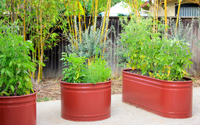 container veggies