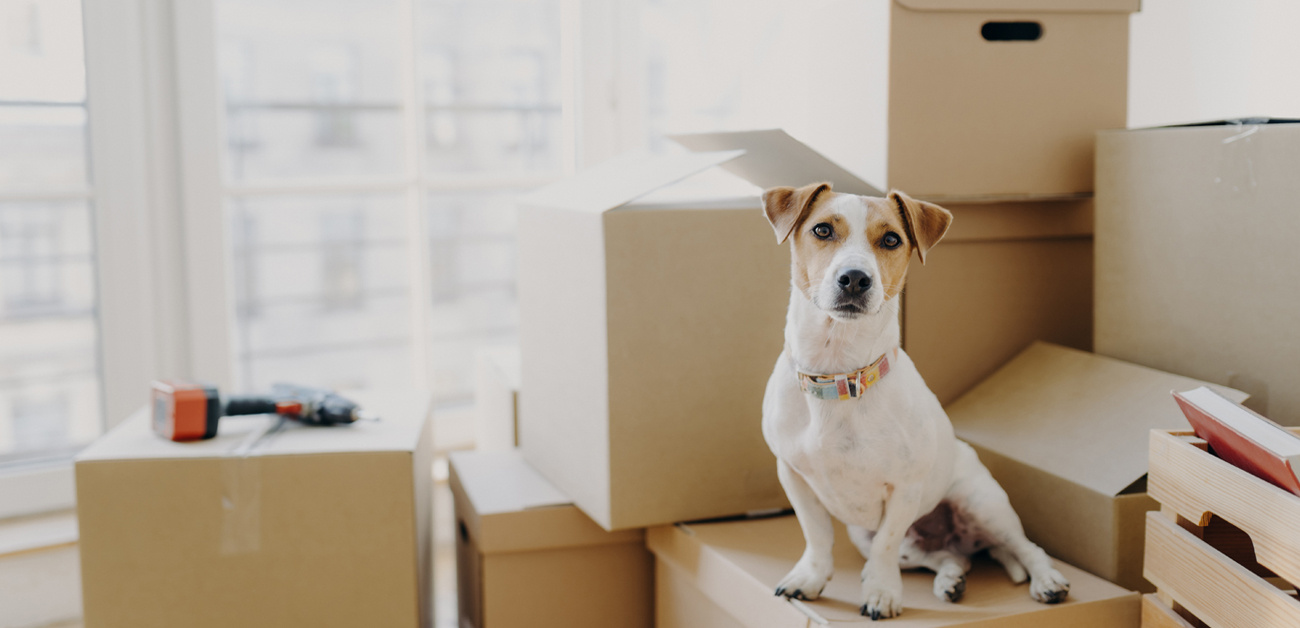 dog sitting on packed moving boxes