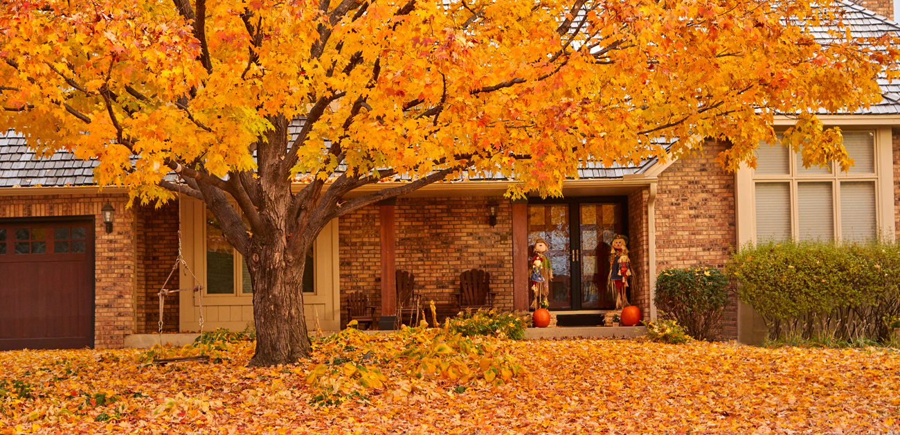 Home in fall with sugar maple in front yard