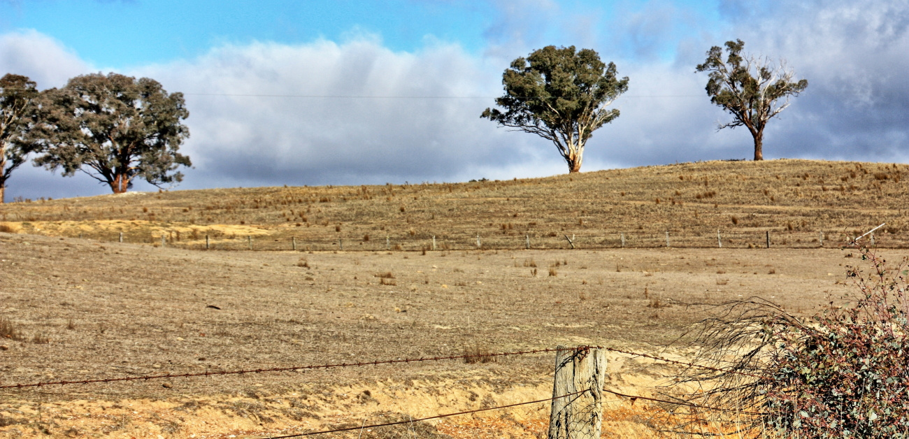 Land under drought conditions