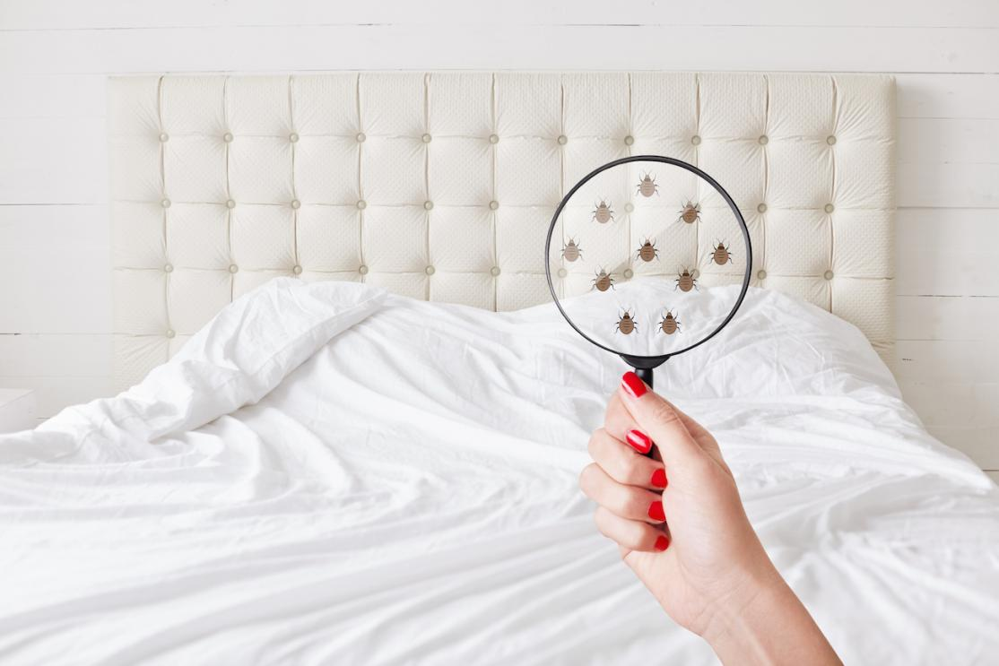 Spotting bed bugs in home