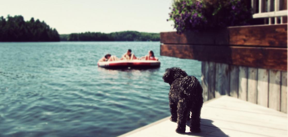 Dog on deck of lakefront home
