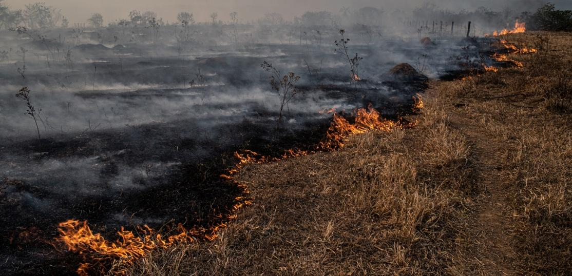 Wildfire burning grass and trees