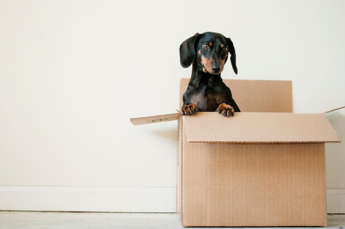What to do before movers show up