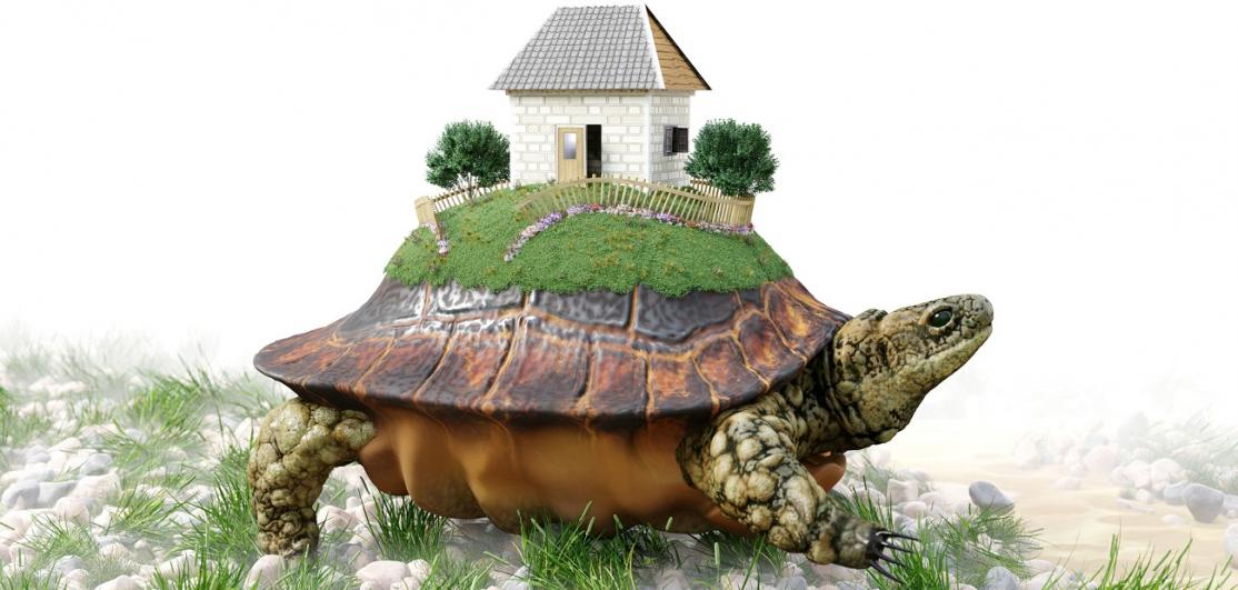 Turtle with toy house on its back