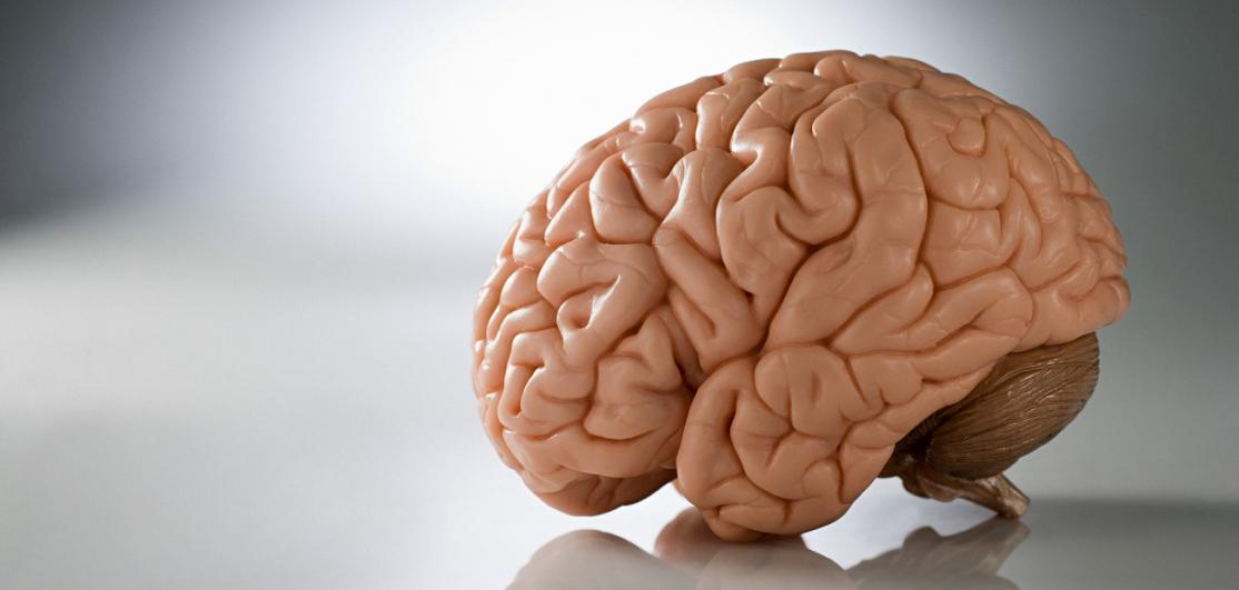 A model of the brain