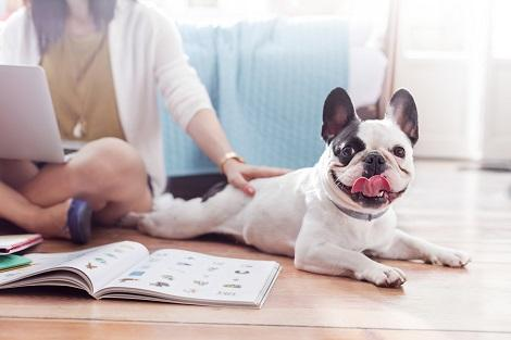 Keeping a listing clean with pets