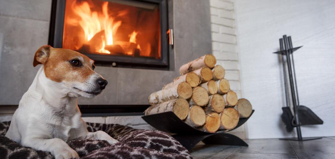 dog enjoying fireplace