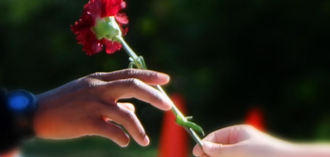 One person handing a flower to another