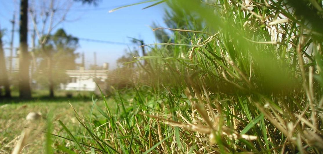 An unattractive lawn seen from a low angle