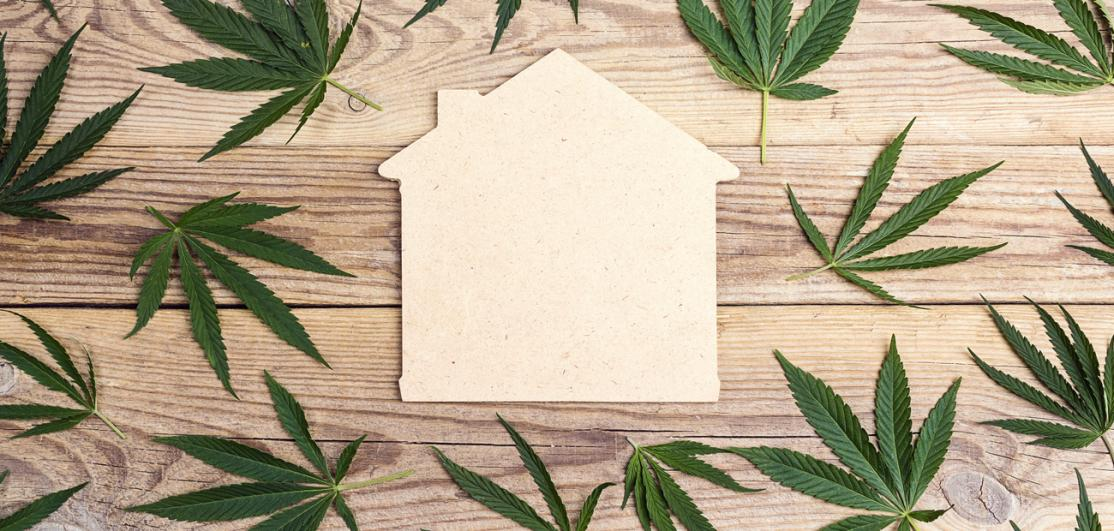 cut out house surrounded by pot leaves