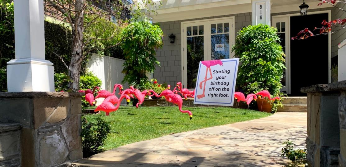 Flamingos in front yard