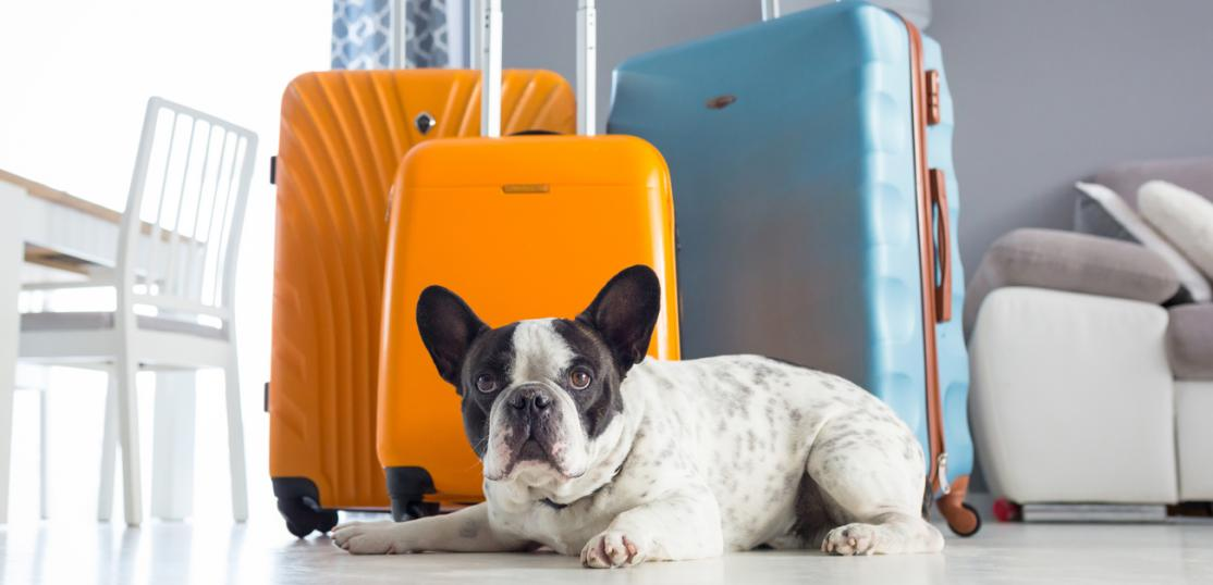 small dog next to packed luggage