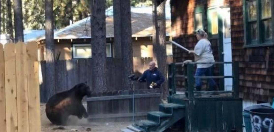 bear near cabin