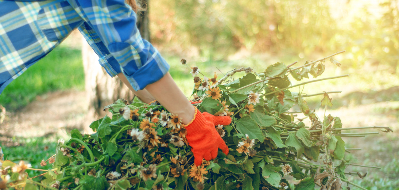 woman cleaning up garden in fall