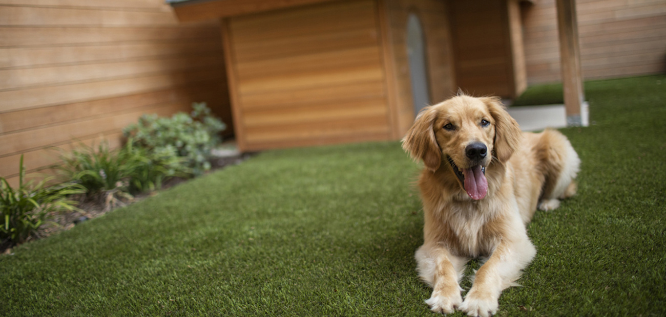 Golden retriever sits in front of dog house at a model home.
